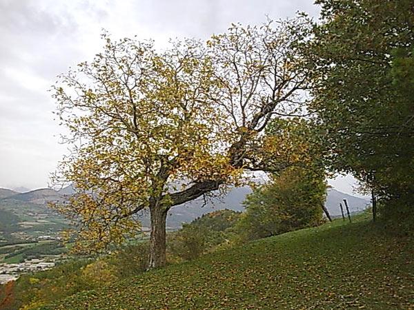 arbre_automne