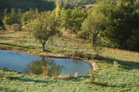 anakhya-heron